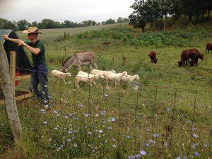 Farms03