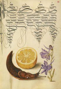 Sour Orange, Terrestrial Mollusk, and Larkspur