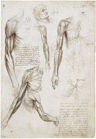 The Study of the Anatomy in Renaissance Art