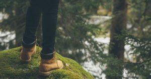 forestbathing04