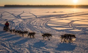 Iditarod01