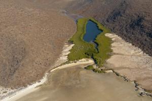 Mangroves01