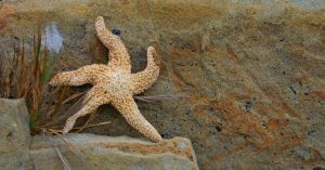 Starfish01