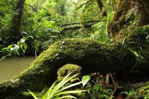 Ecosystems05
