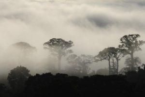 Ecosystems14