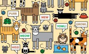 Meow01