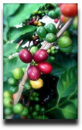 coffeehistory82