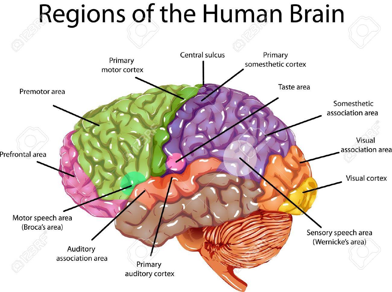 Seeking a Predominant Theory of Mind: Dualism versus ...