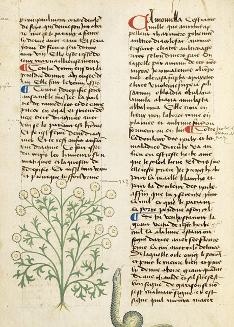 The Art and Knowledge in Medieval Herbals