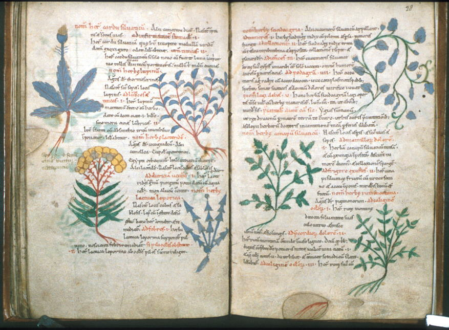 A History of Biology in Medieval Islam